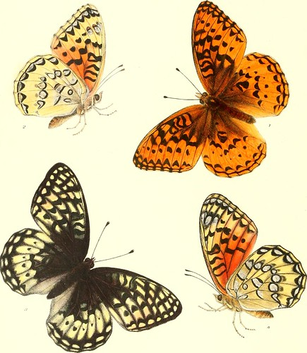 """Image from page 191 of """"Synopsis of North American butterflies"""" (1879)"""