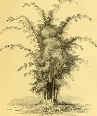 Anglų lietuvių žodynas. Žodis royal velvet plant reiškia royal velvet augalų lietuviškai.