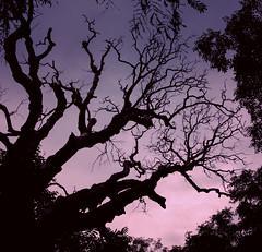 Sunrise under the tree (boscoloenrico) Tags: pink trees light sky night contrast sunrise bay strada alba sony rosa croatia cielo croazia contrasto osor rx100