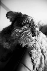 DSC_0014_1 (Manuel D Snchez) Tags: dogs perros dogos seleccionar