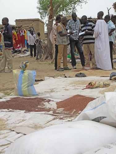 Tchad - Formation Etudes sur la sécurité semencière (ESS) -  Enquête-marché local: vendeurs de semences et enquêteurs