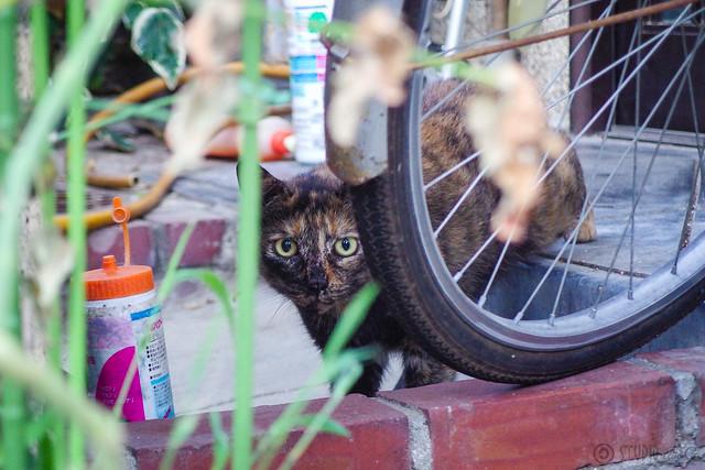 Today's Cat@2014-08-03
