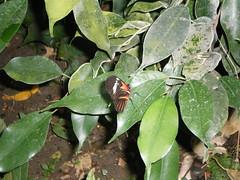 2008-10-18 Tropical Wings _67 (Velda Tiger Lily Varney) Tags: camera pentax compact cameraequipment pentaxoptiol30 brandmain