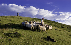 Con el rebaño (Jabi Artaraz) Tags: verde mañana azul paseo cielo nubes zb monte saibi hierba ovejas rebaño ardiak goizean artaldea jartaraz euskpflickr