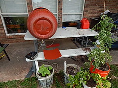 WORKING ON DIY COMPOSTER BARREL (coupe1942) Tags: compost compostbin composter diycompostbin