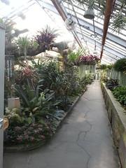 20140809_171155 (Kenzie LaMar) Tags: cactus plants plant cacti succulent montreal botanicalgardens