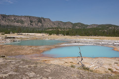 DSC08544 (sylviagreve) Tags: unitedstates yellowstonenationalpark yellowstone wyoming 2013