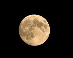 99% of the Harvest Moon.. (l_dewitt) Tags: september fullmoon harvestmoon southeastern septemberfullmoon southeasternconnecticut harvestfullmoon fullmoonphotos fullmoonimages cornfullmoon newenglandfullmoon