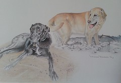 Labradors (Louise Dodds) Tags: dog pet art labrador artist gift portraitartist drawingportrait