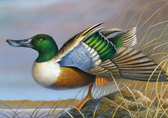 2014 Federal Duck Stamp Art Contest Entry 08 (USFWS Headquarters) Tags: art duck conservation stamp wetlands waterfowl