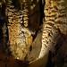 Underground textures