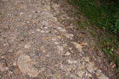 Stone-paved ancient Roman road. (Elise Swart) Tags: france country frankrijk fr campagne lafrance pavers klinkers platteland klinker romeins pavestone ldf pavestones straatklinker romeinseweg