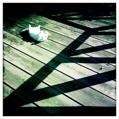 morning cat backyard fushya hipstamatic iphone5s johnsレンズ... (Photo: SOVA5 on Flickr)