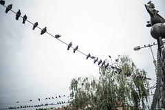 Pigeons' Home! (Arthur Janin.) Tags: street leica trip bridge light art digital 35mm arthur photo bath hungary natural f14 homeless budapest floating m elements pont 35 summilux asph 240 janin fle therme typ hongrie aspherical