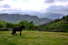Caballo negro (ed10vi) Tags: espaa horse mountains spain asturias lamostayal