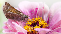 Pretty in Pink (Bereno DMD) Tags: pink wild flower color detail macro nature yellow butterfly bug insect bright small moth 100mm petal stamen pollen mothernature 100mmmacro