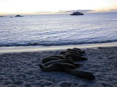 Galapagos - San Cristobal-249