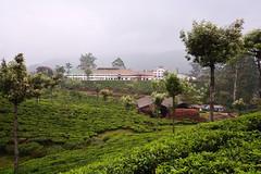 India - Kerala - Munnar - Tea Plantation - Tea Factory - 120 (asienman) Tags: india mountains kerala hills teafactory teaplantation munnar teapicker asienmanphotography teaplantagens