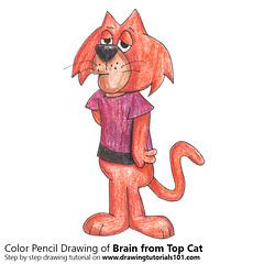 Brain from Top Cat with Color Pencils (drawingtutorials101.com) Tags: brain top cat topcat animated cartoon cartoons hanna barbera tv sketch sketches sketching pencil draw drawing drawings how color coloring