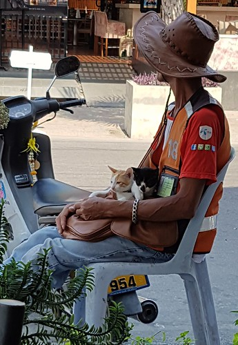 Cats in the bag Hua Hin