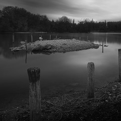 Geese island (Michel Couprie) Tags: france essonne lake lac water animal geese goose longexposure noiretblanc nb bw blackandwhite clouds nature naturallight composition poles canon eos tse24mmf35l wideangle couprie