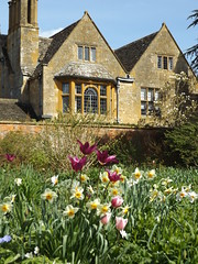 The Old Garden, Hidcote Manor Garden, Gloucestershire, 3 April 2017 (AndrewDixon2812) Tags: hidcote manor garden nationaltrust cotswold cotswolds chipping campden gloucestershire lawrence johnston old tulips daffodils flowers