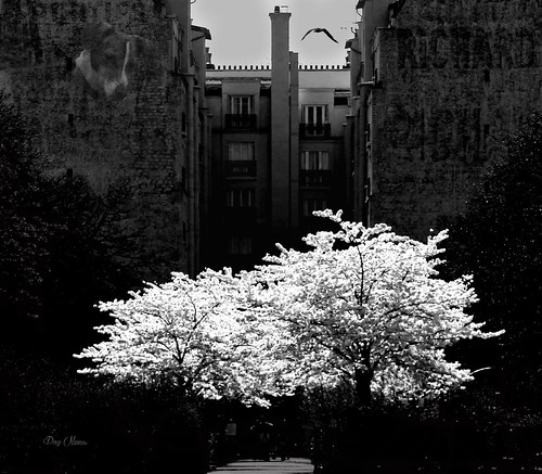 l'arbre blanc - The white tree