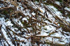 Thin Blanket (jswigal) Tags: columbus ohio park nature snow spring winter season seasons osu prairie oak oaks metro outdoors outside intimate landscape tree plant grass white grey blue red green orange cool sony alpha a7r a7 ilce minolta rokkor