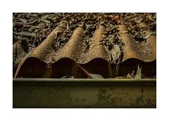 Alfred Nicholas Memorial Gardens (phunnyfotos) Tags: phunnyfotos australia victoria vic melbourne dandenongranges dandenongs thedandenongs corrugatediron corrugated rust rusty rusted rusting gutter spouting leaves leaflitter autumn sherbrooke nikon d750 nikond750 garden landscaping boathouse park parksvic fff border frame