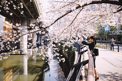 Spring has come :) (xperiane (Extremely busy)) Tags: cherry gr richo tokyo japan サクラ 桜 春 水道橋 新三崎橋