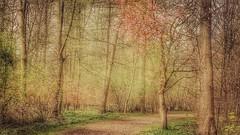 Spring (yve_all) Tags: frühling spring landscape landschaft natur nature licht light farben colours blickwinkel view bäume trees