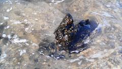 Lavastone (villeveta) Tags: borås lanzarote morromar puertodelcarmen sten sverige sweden veli vilppu lava magma stone vawe vågor wave tías canarias spanien es rock lavarock