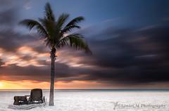 Palm Sunrise (Sònia CM) Tags: sea seascape sky sunrise costa clouds cloudy palms beach morning mar morninglight mejico mexico lumix lumixfz2000 lumixfz2500 landscape longexposure largaexposicion llargaexposicio relax holidays playa playadelcarmen