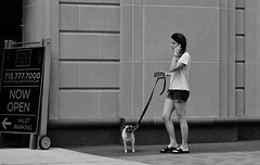 Pug And Ponytail (burnt dirt) Tags: houston texas downtown city town mainstreet street sidewalk streetphotography fujifilm xt1 building office girl woman people person dog leash dogwalker phone cellphone ponytail shorts sandals pug bw blackandwhite