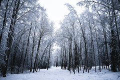 winter in the woods (Nippe16) Tags: winter snow fog mist atmosphere landscape woods forest finland suomi monochromatic moody tree trees rain frost frosty