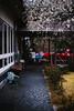 Sanrokugama : Plum Blossoms (Nazra Z.) Tags: bizen okayama japan spring 2017 plumblossoms raw