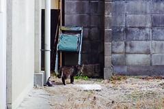 Today's Cat@2017-04-04 (masatsu) Tags: cat thebiggestgroupwithonlycats catspotting pentax mx1