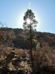 Bandelier National Monument, New Mexico (honestys_easy) Tags: nm newmexico bandeliernationalmonument bandelier nativeamericans nativeland ruins nationalmonument landscapes canyon cliffdwellings cliffdwelling