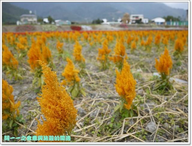 台東關山景點米國學校關山花海image015