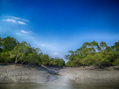 World Environment Day 2014 (Kingshuk Mondal) Tags: world day environment 2014 kingshuk sundarban sundarbannationalpark kingshukmondal