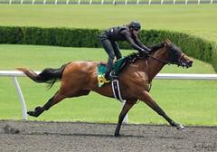 OBS June Undertack '14 (Shazstock) Tags: horse black race dark grey bay mare florida sale gray racing chestnut workout sales colt stallion thoroughbred equine tack ocala filly gelding