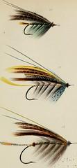 Anglų lietuvių žodynas. Žodis sprig tail reiškia šakelėmis uodegos lietuviškai.
