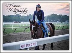 Tonalist (EASY GOER) Tags: summer horses horse ny newyork sports racetrack race canon athletics track photos saratoga competition upstate running racing historic event 7d athletes races sporting spa thoroughbred equine thoroughbreds compete sportofkings