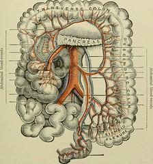 Anglų lietuvių žodynas. Žodis appendicitis reiškia n med. apendicitas lietuviškai.