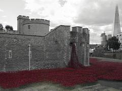London 201406 (AlanOrganLRPS) Tags: london ceramic remember poppies ww1 moat toweroflondon