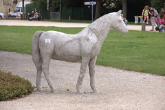 Caen - Chteau Ducal (Thethe35400) Tags: animal cheval animaux tier chevaux animalart faune equid
