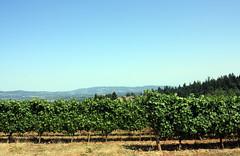 (SofiDofi) Tags: blue sky usa green beautiful oregon landscape vineyard vines view farm scenic august hills winetasting winetour willamettevalley langewinery dundeehills summer2014