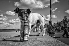 Portobello-7.jpg (martin.mutch) Tags: book edinburgh streetmonoexhibitionbestfavourites