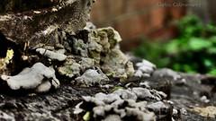 Fungus (KARLINHOS18) Tags: paisajes naturaleza nature landscape photography photo flickr fuji bokeh venezuela fungi lara fotos fungus finepix fujifilm hay fotografia por barquisimeto hongos 500px porhay finepixs1800