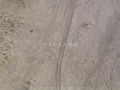 Tulul Abu Fatas? (38RNA640375) (APAAME) Tags: archaeology ancienthistory iraq middleeast airphoto oblique aerialphotography aerialphotograph geocity camera:make=canon exif:make=canon aerialarchaeology geocountry camera:model=canonpowershotg5 geostate exif:model=canonpowershotg5 exif:lens=72288mm exif:aperture=ƒ56 exif:isospeed=50 exif:focallength=23mm geo:lat=31970234 geo:lon=45678804 tululabufatas pleiades:depicts=912966 geo:location=to31971707419456773539575tululabufatas38rna640375